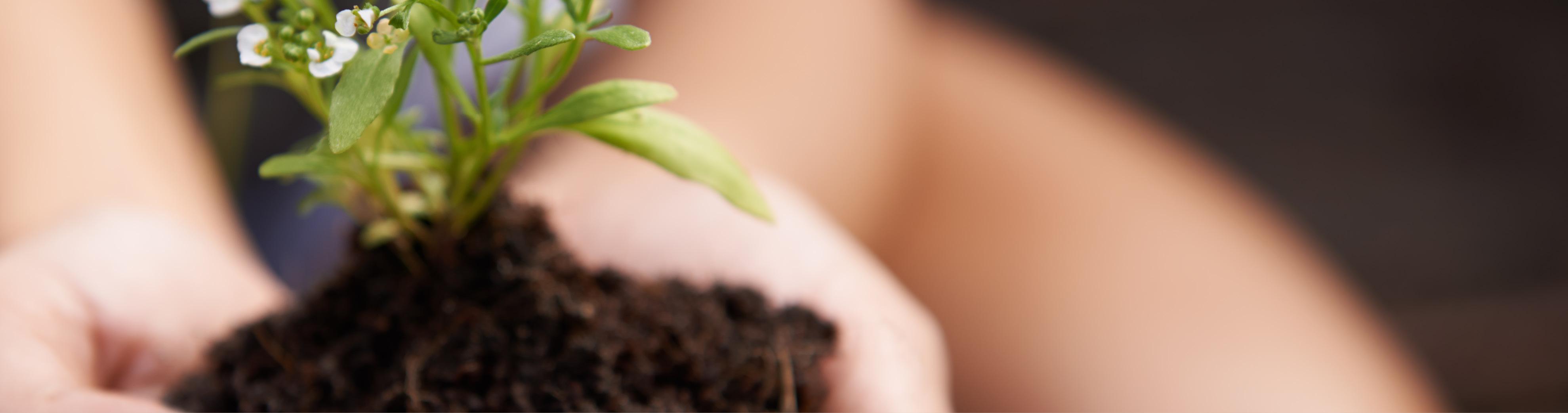 L'alternative écologique